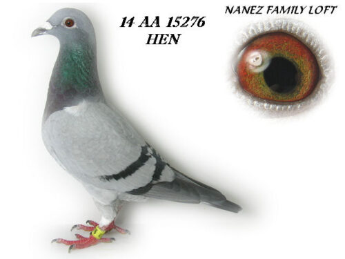14 AA 15276 PIC