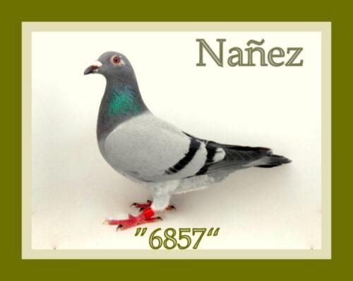 Nanez